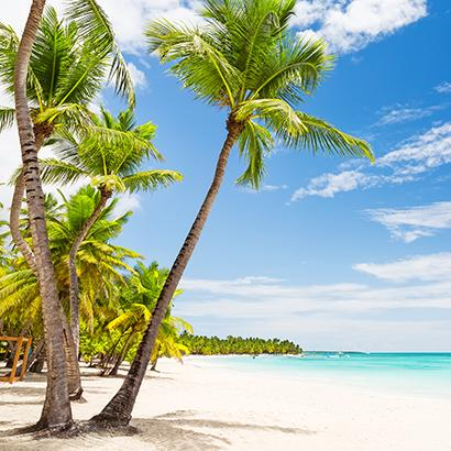 palm trees gently sway in the ocean breeze in Punta Cana, Dominican Republic