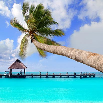 Palm tree over water in Cancun, Mexico