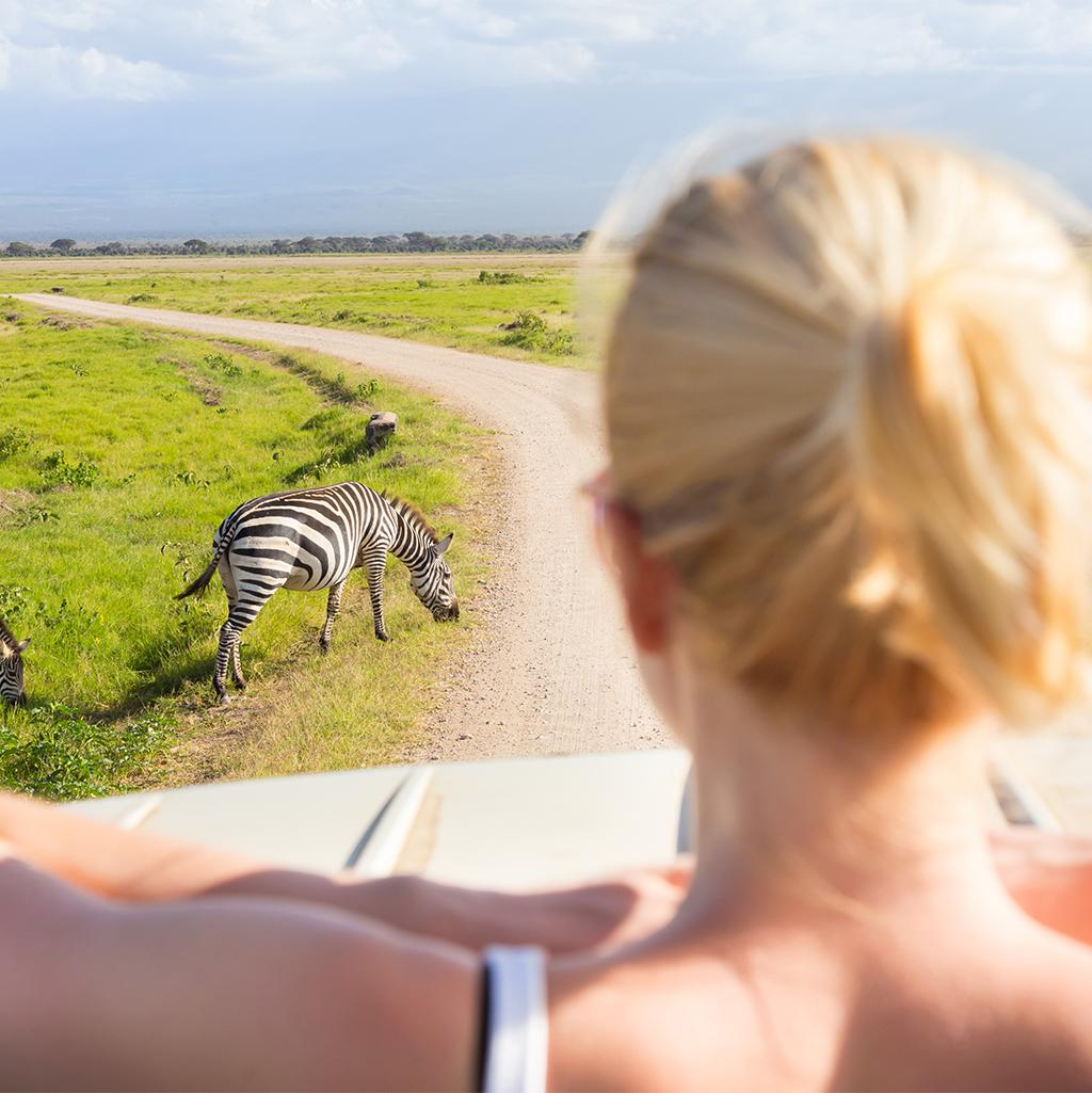 View of Zebras with Africa vacation packages