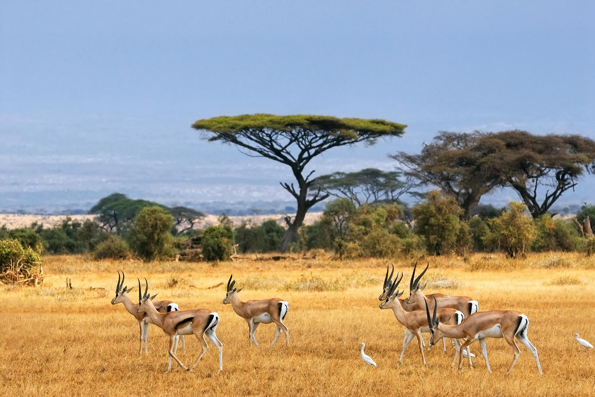 Wild sahara safari with Africa vacation packages