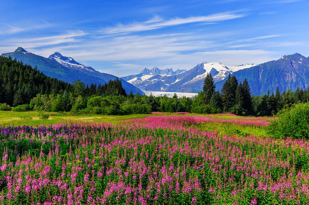 View fields full of flowers bordered by towering mountains with Alaska tours