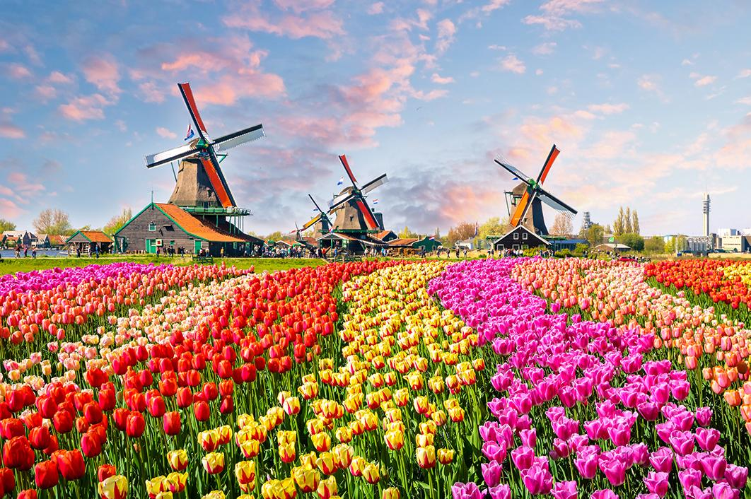 Views of Amsterdam's windmills and tulips from Amsterdam cruises