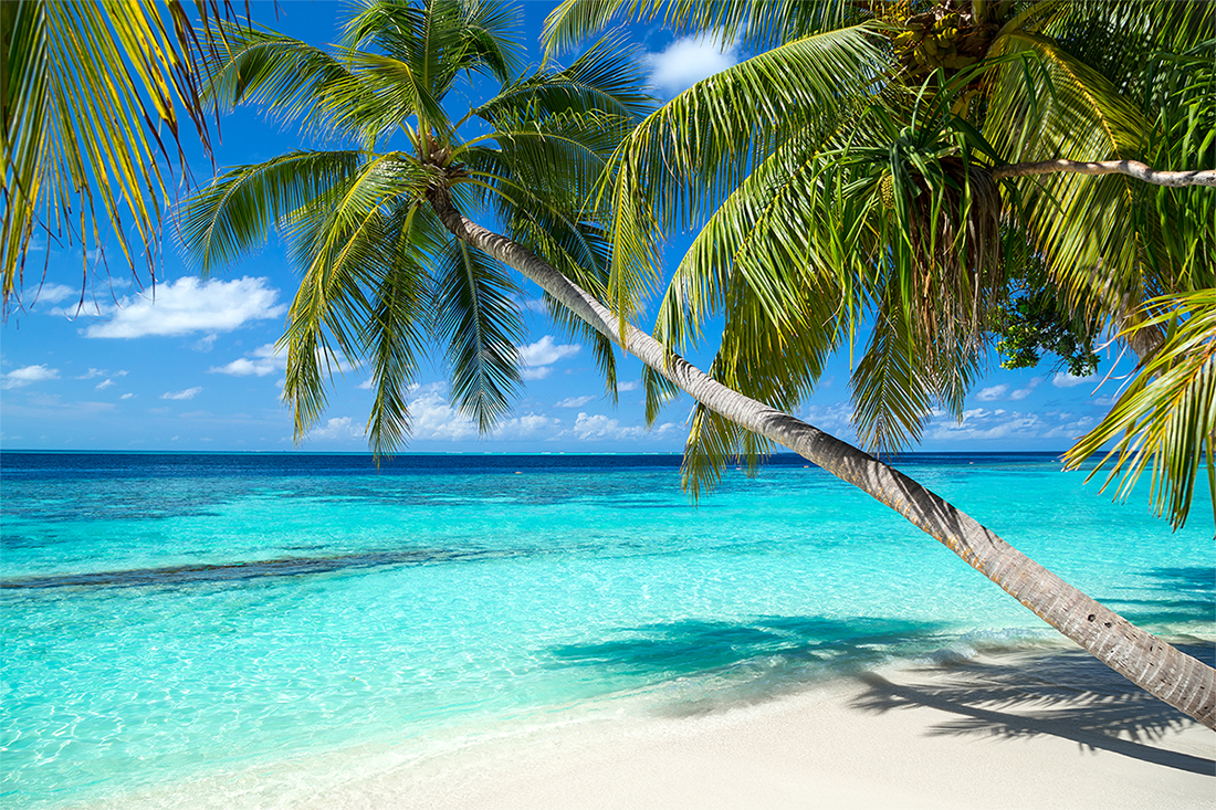 Palm trees await on your Caribbean vacation