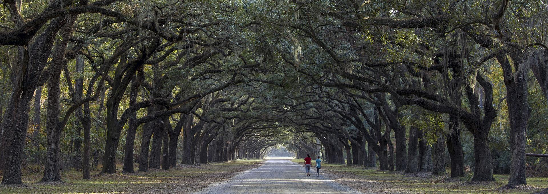 A pair of people riding bikes through a grove of trees in the Carolinas