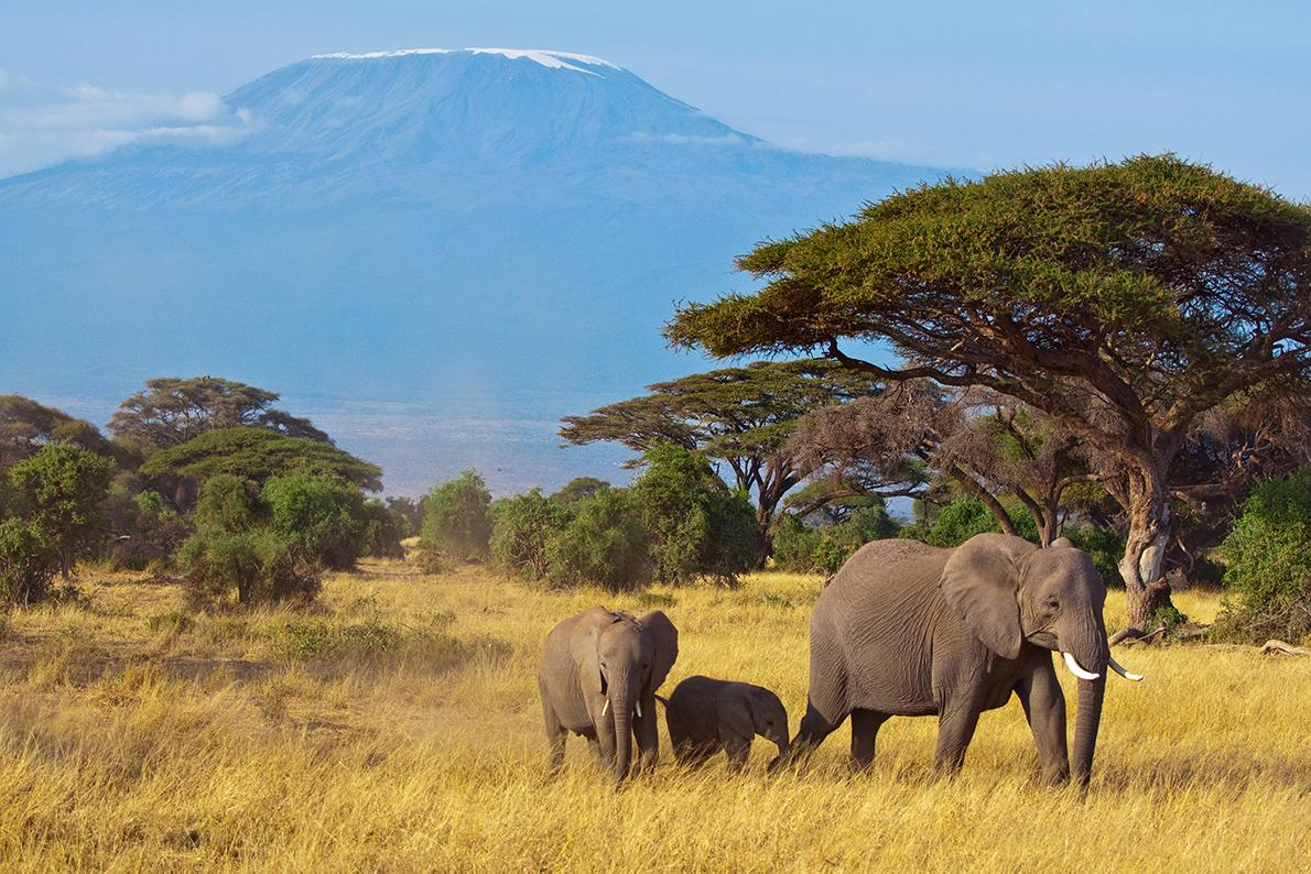 Experience views of the serengeti and Mount Kilimanjaro with Collette Vacations Tours