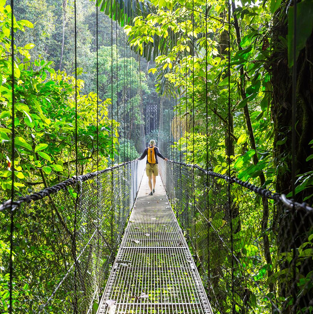 Experience walking along suspension bridges in the Costa Rican rainforest