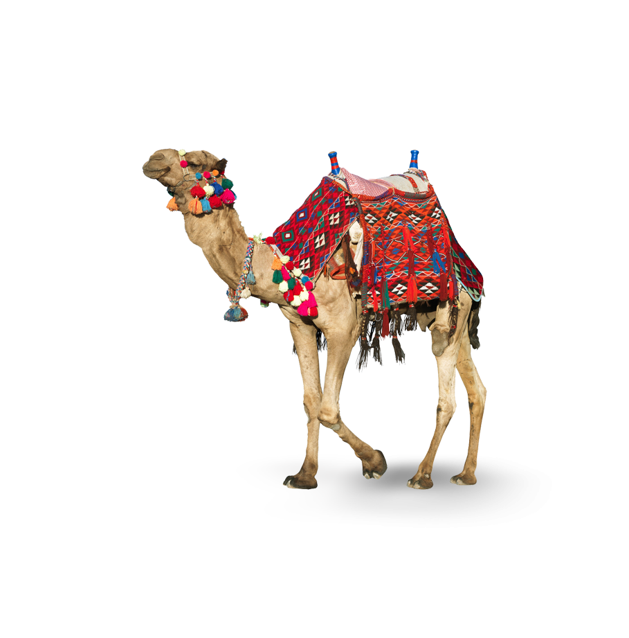 A camel - a common motif in Dubai