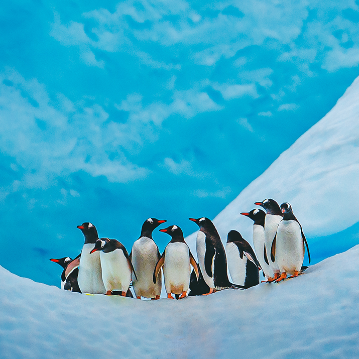 See penguins on an Antarctica trip with Intrepid