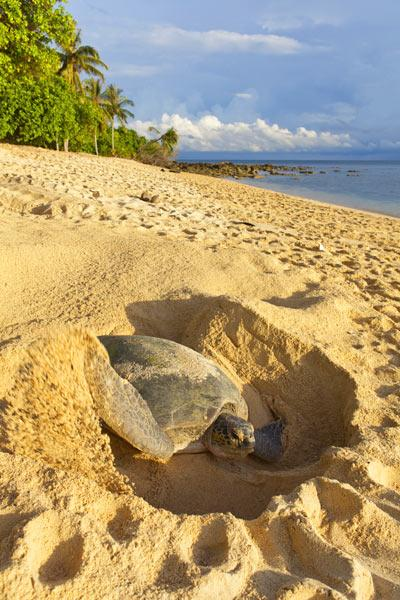 Slow Down and Watch the Sea Turtles in Antigua