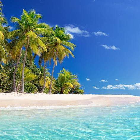Palm trees along a Caribbean beach