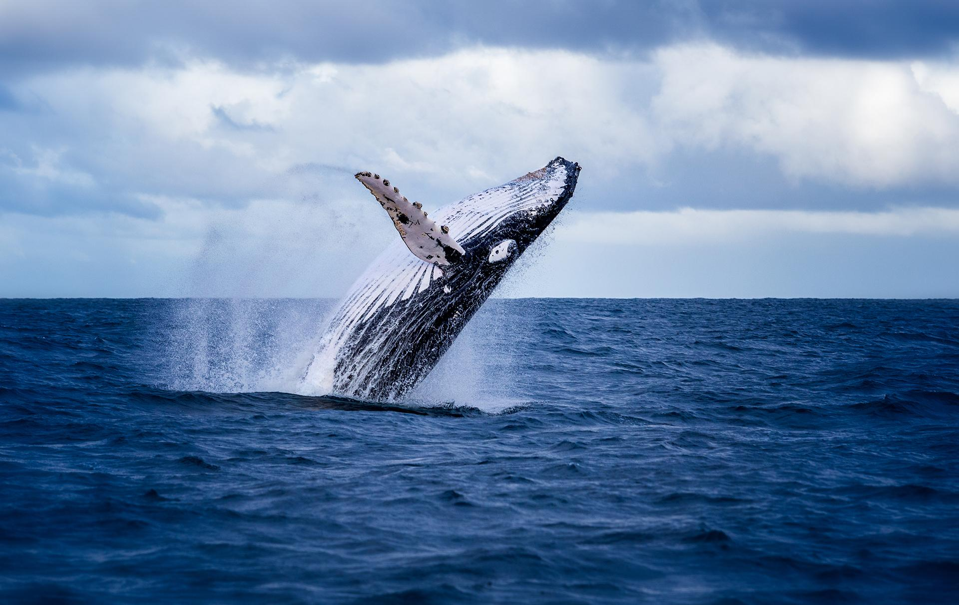 Whale Watching Around the World