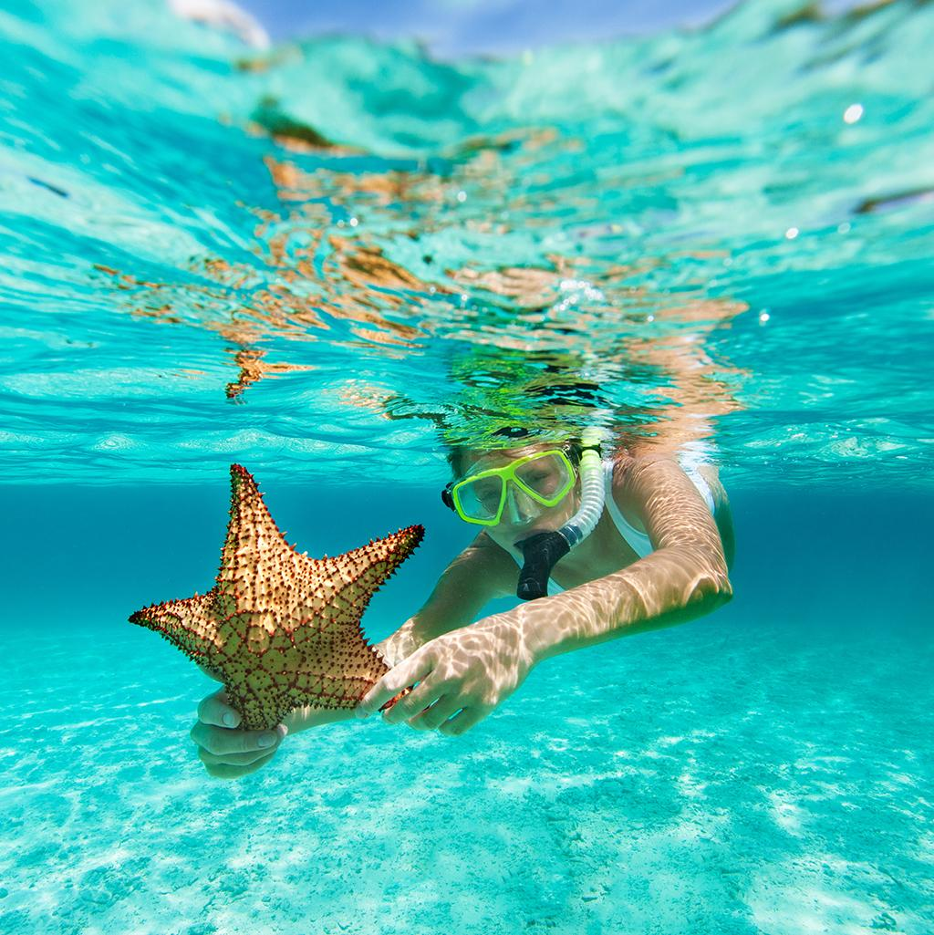 Snorkel with starfish on Maldives vacation packages