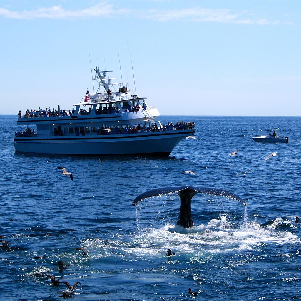 Tourists whale watching on Stellwagen Bank in Massachusetts