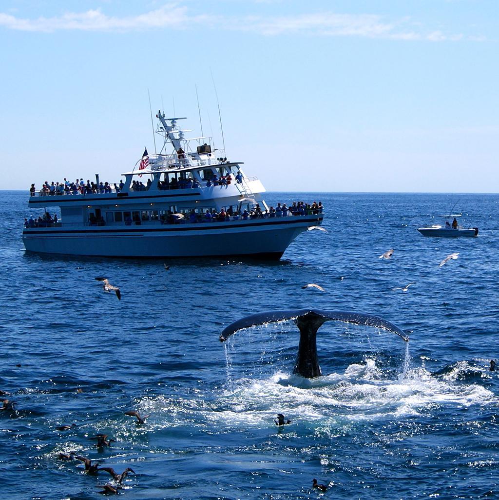 Tourists whale watching on Stellwagen Bank in Massachusetts