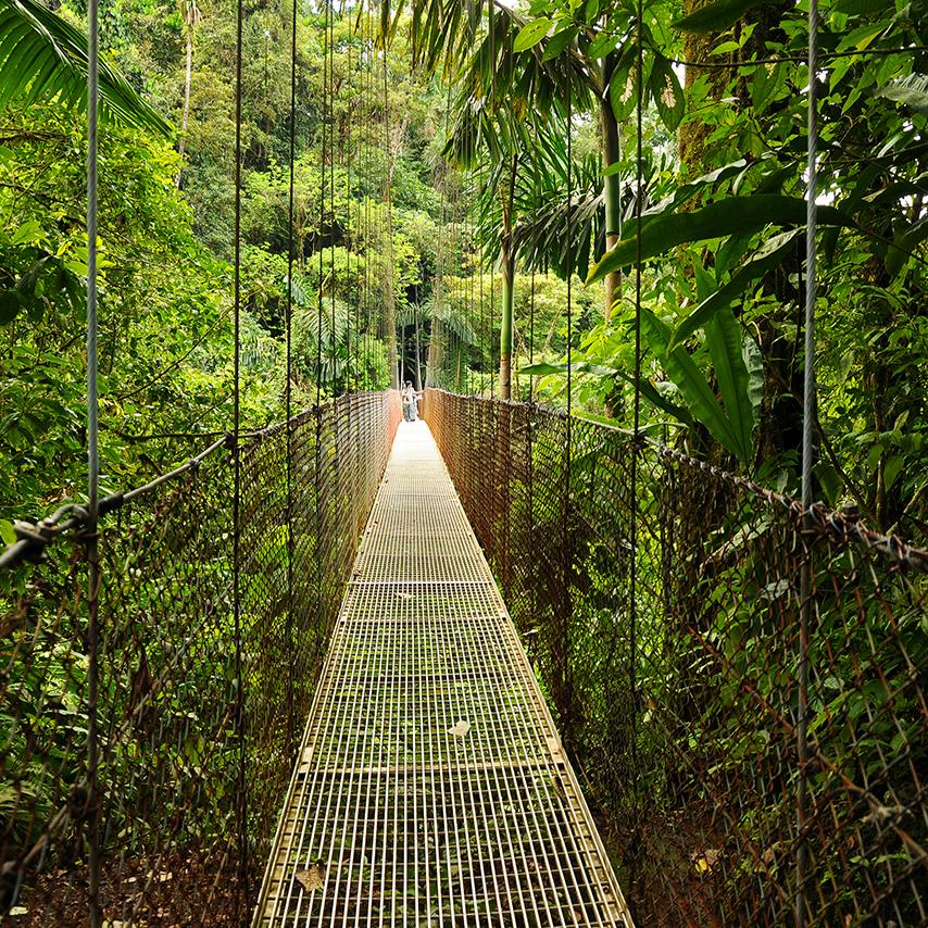 Unforgettable excursions through the rainforests and other exotic locales await - let a LIberty Travel ocean Cruise take you there