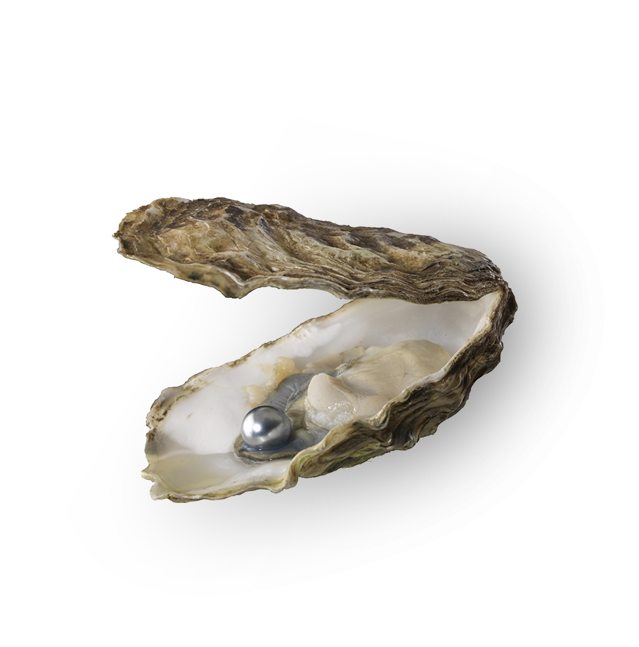 Pearl in an oyster from Papeete Tahiti