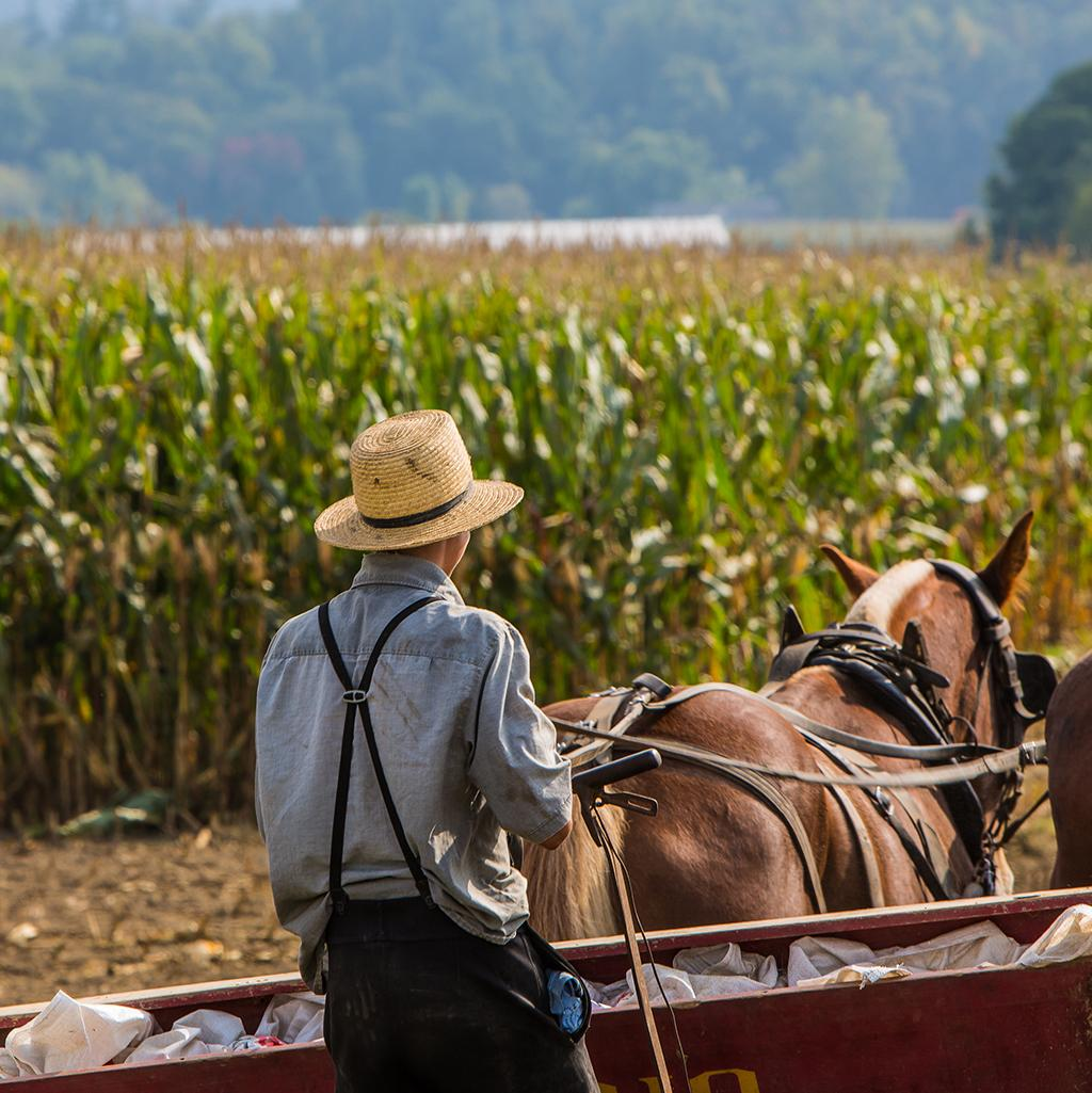 Amish farmer tilling the fields in Pennsylvania