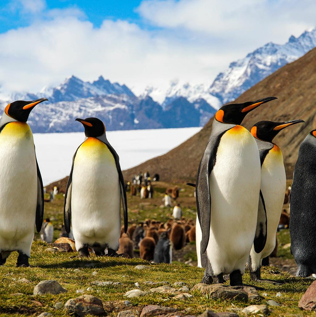 Let your happy feet carry you to new experiences and exotic locales on a Peregrine tour