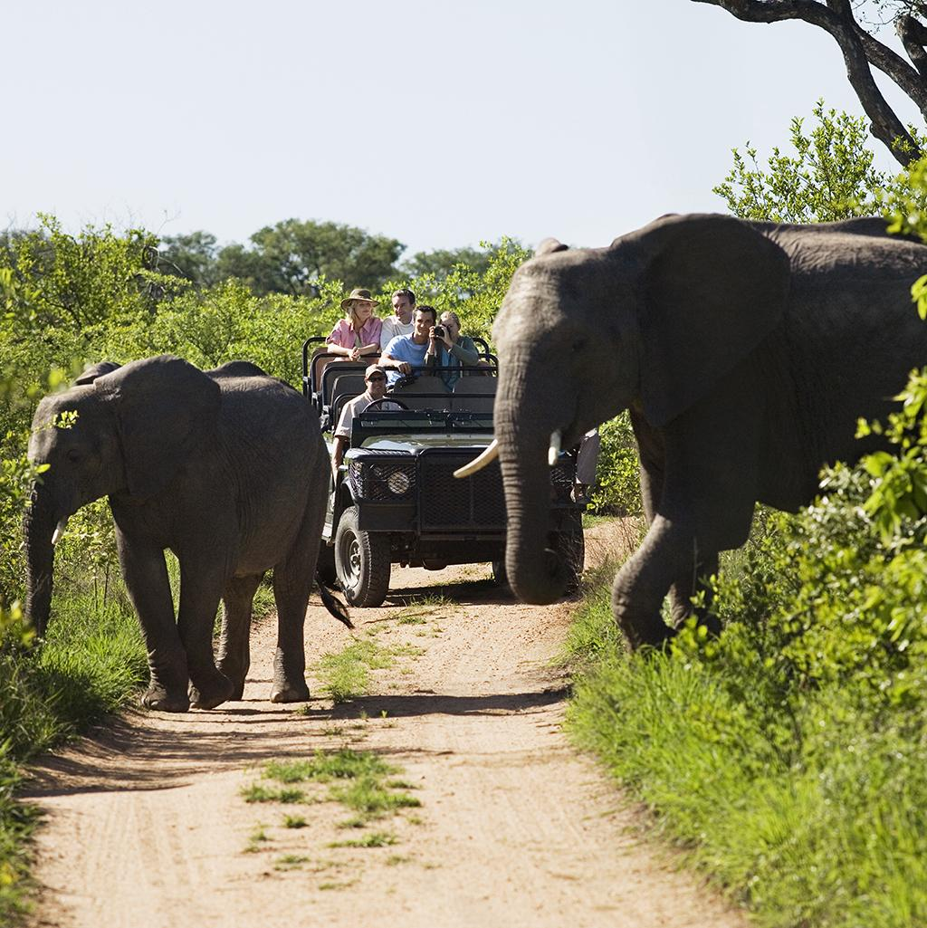Bucket list experiences: African Safari Liberty Travel Vacation Packages