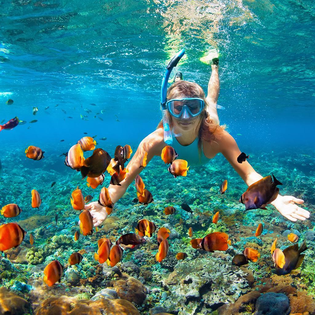 Snorkeling in Sydney Australia