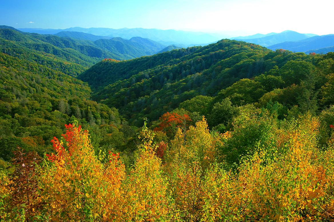 The foliage in the Smoky Mountains of Tennessee