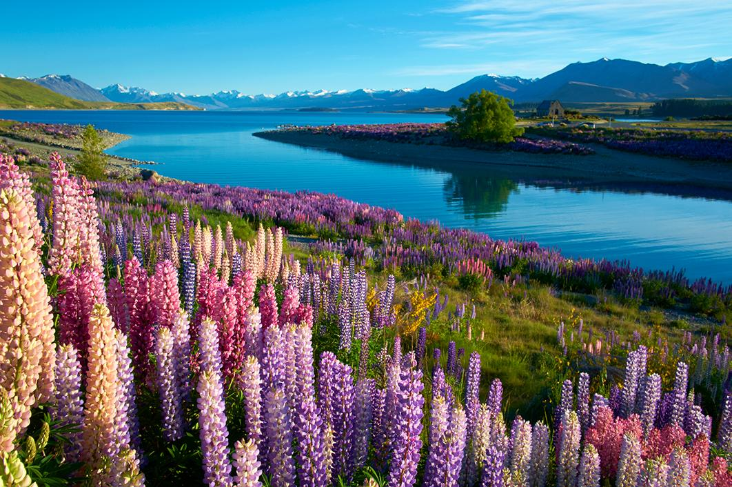 Topdeck Tour through fields of flowers in New Zealand