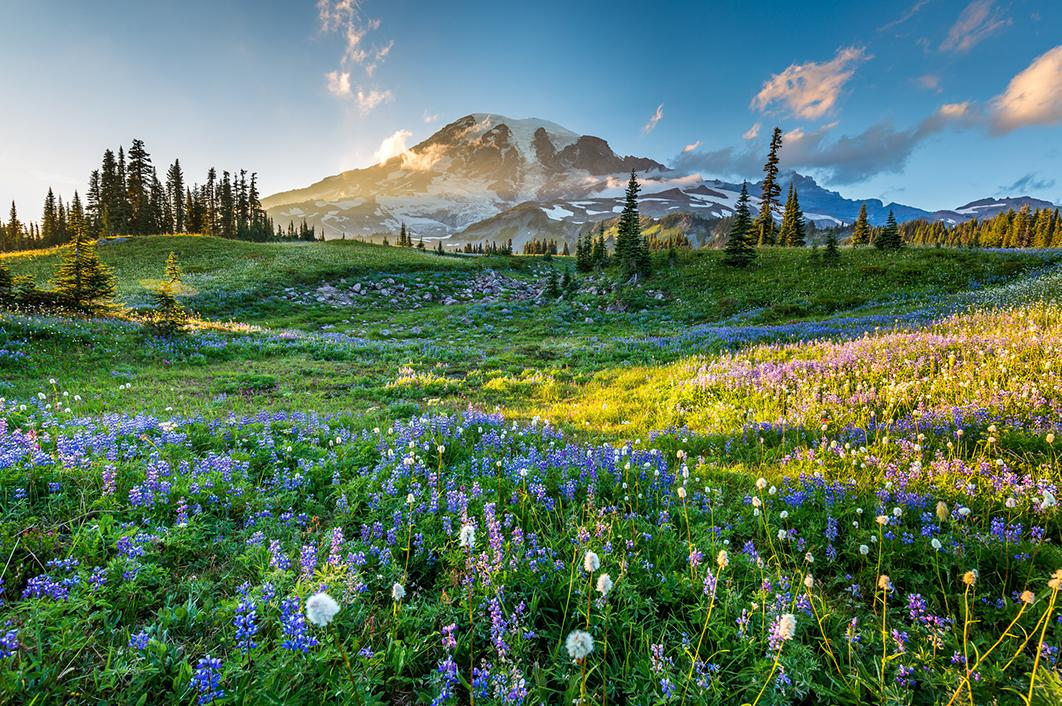 Views of flowers and mountains in Washington state