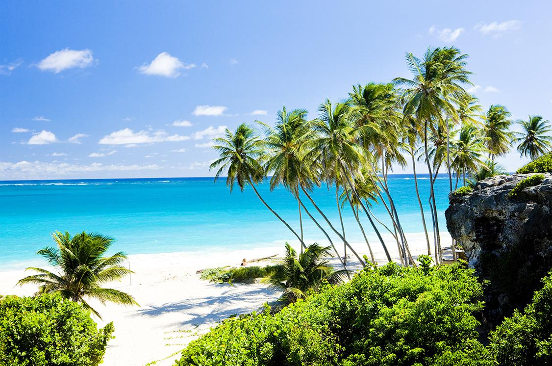 Palm trees on the West Coast of Barbados