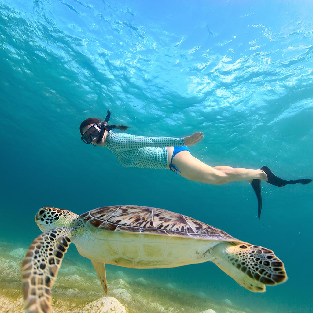 Snorkeling with a turtle on vacation in Barbados' West Coast