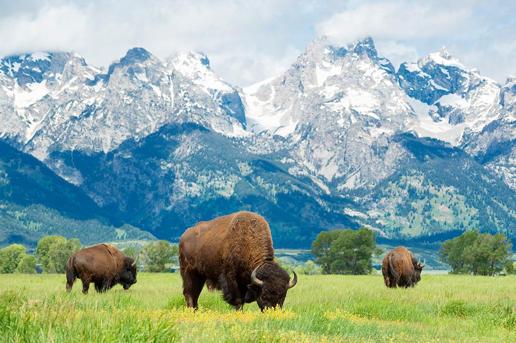 Experience mountains, plains, and American bison in Wyoming