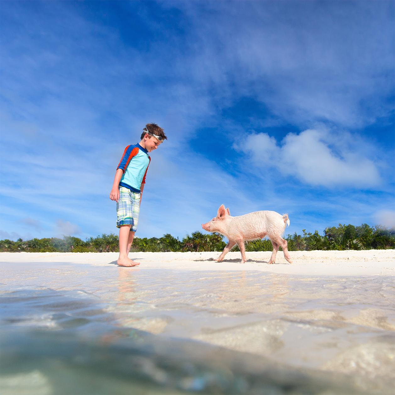 See it all on your Bahamas excursion