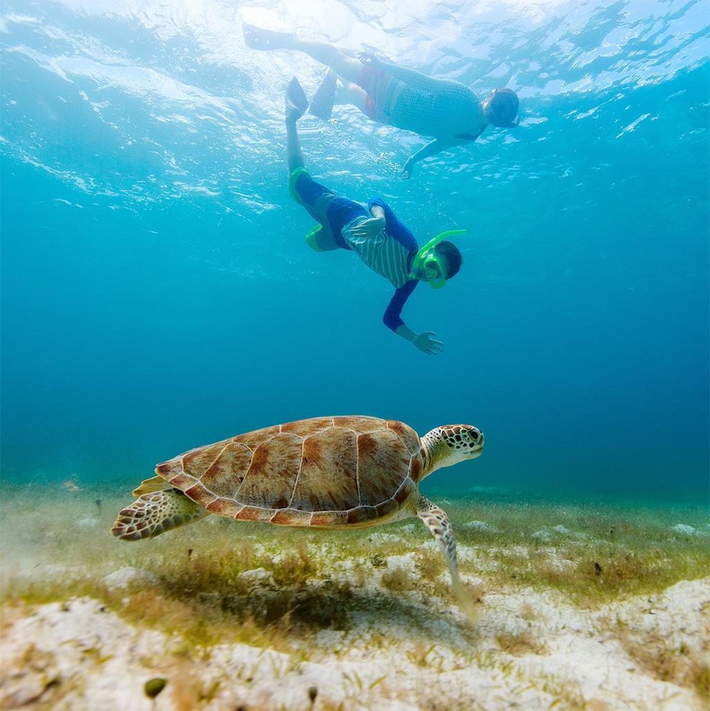 Wildlife excursions on your Barbados vacation