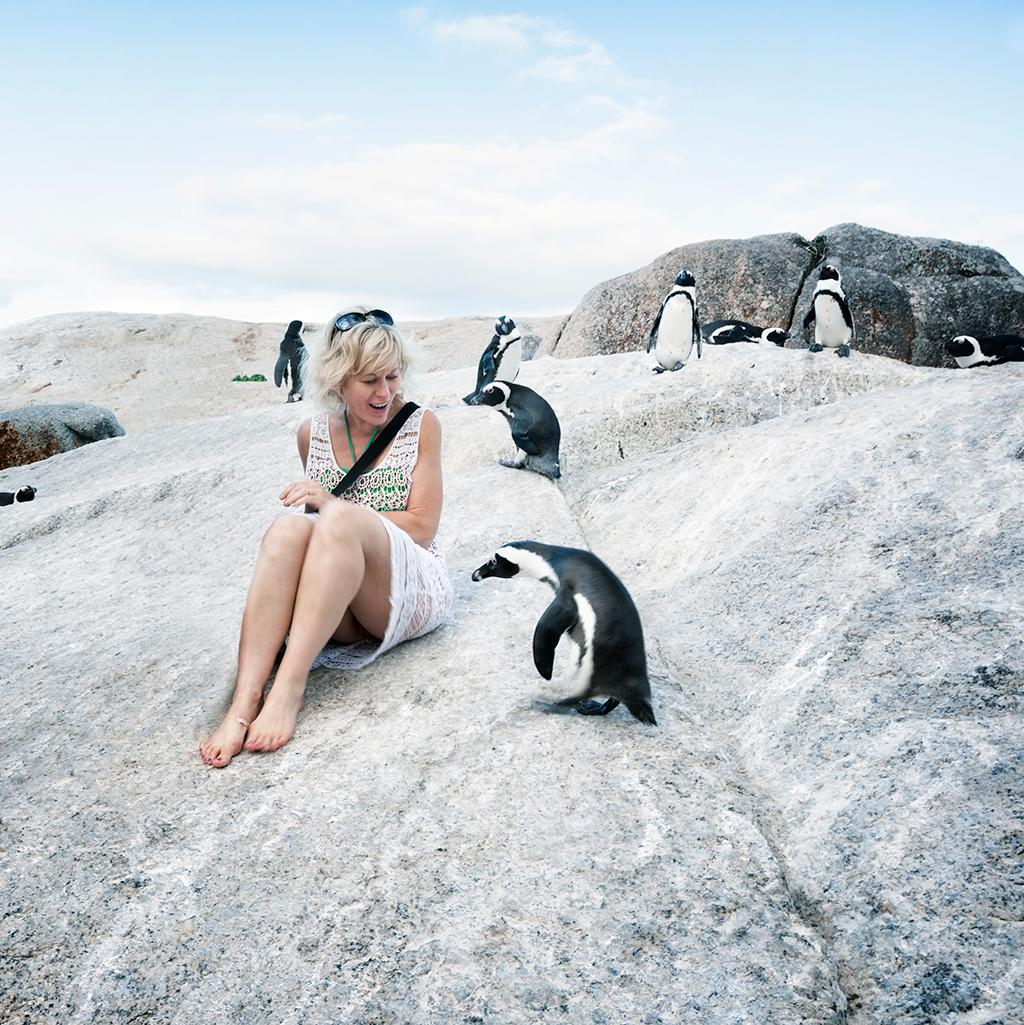 Penguins in Cape Town South Africa