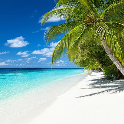 Caribbean palm trees on beach overlooking ocean