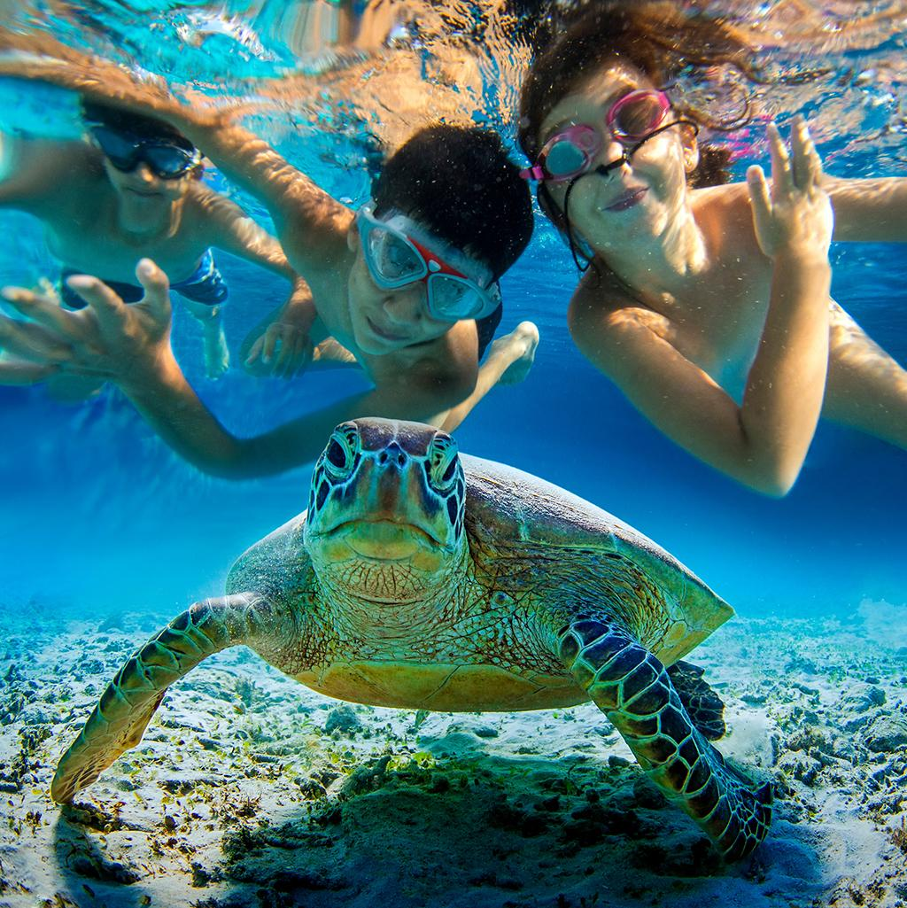 See sea life on this tropical excursion