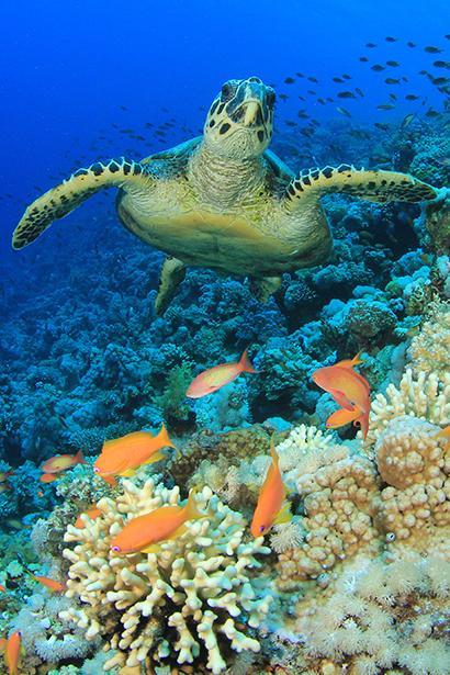 Sea turtles under the sea