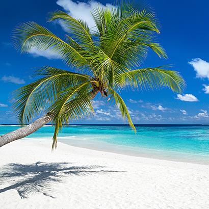 palm tree on beach near ocean