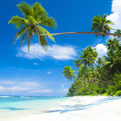 palm trees arching over a beach