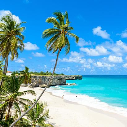 palm trees overlooking pristine Caribbean beaches