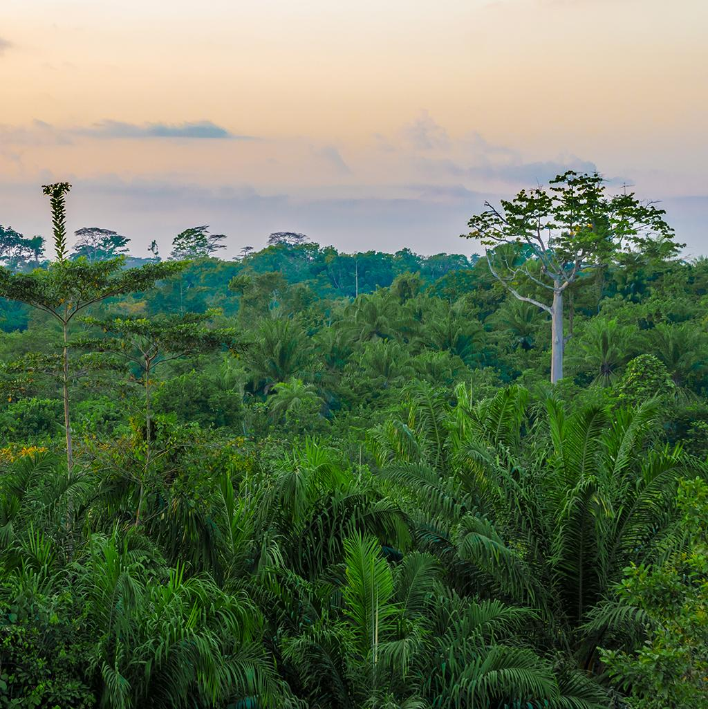 Delight in the natural beauty of lush rainforests with Liberia vacation packages