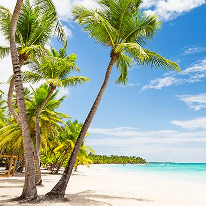 palm trees arching over the shores of a beach in Punta Cana, Dominican Republic