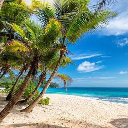 palm trees on a Jamaican beach