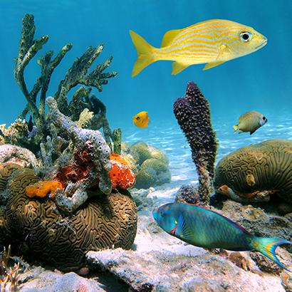 fish swimming around coral reef in Mexico