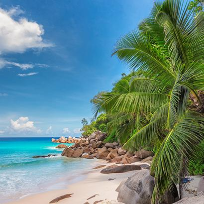 large green palm trees and perched over large rocks along Jamaica coast