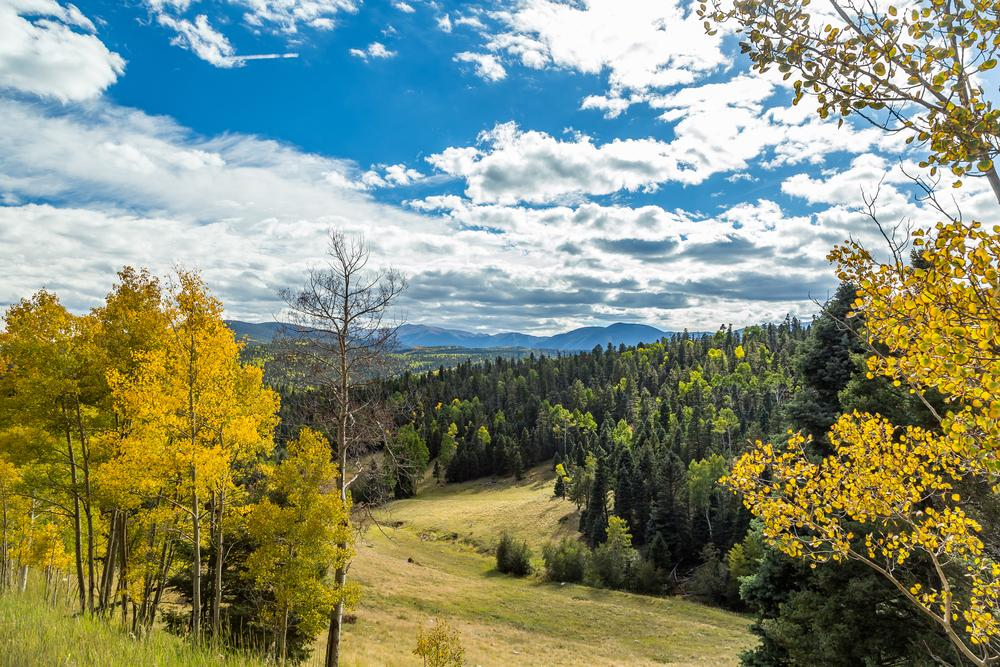 New Mexico's Enchanted Circle foliage